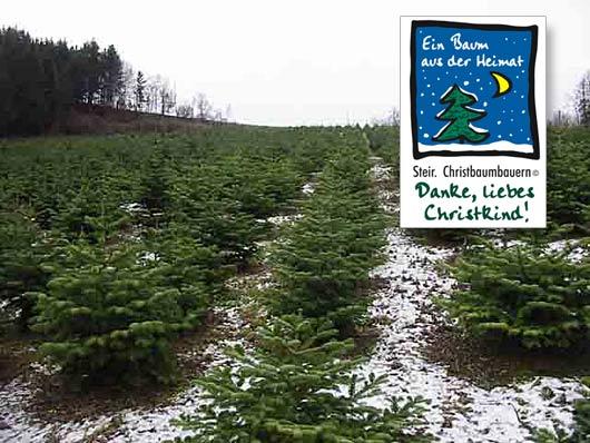 Ihr Christbaum aus der Steiermark