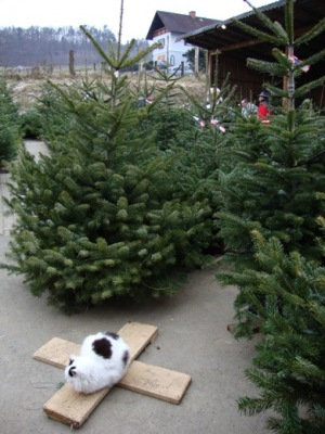 bald ist weihnachten christbaumverkauf im finale. Black Bedroom Furniture Sets. Home Design Ideas