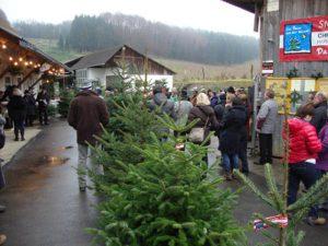 Hochsaison im Christbaumverkauf