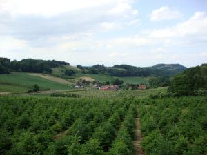 Sicht auf unser Ferienhaus in Höflach